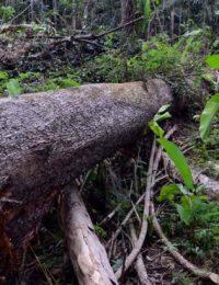 desmatamento-flona-jamanxim-750x410