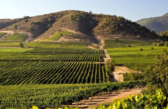 ruta-del-vino-en-valle-del-maipo-santiago-de-chile_2017_201609110817013