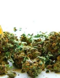 state-now-has-over-50000-medical-marijuana-patients-hero