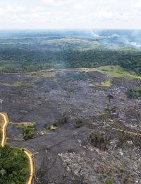 Forest Fires in Brazilian AmazonIncêndio Floresta na Amazônia 2018