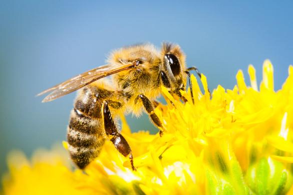 As abelhas são essenciais para a produção de alimentos © Axel Kirchhof / Greenpeace