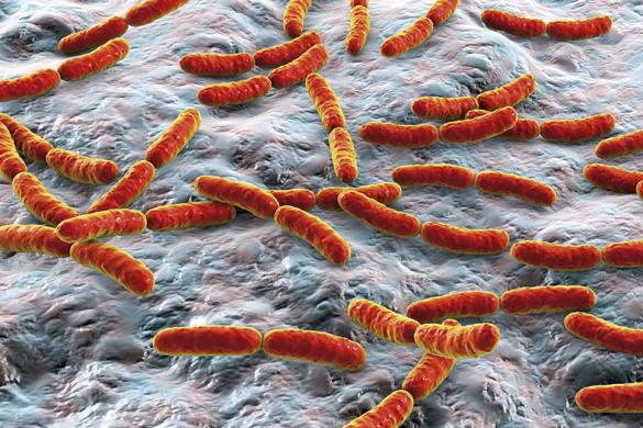microbiota-intestinal-e1553120576366
