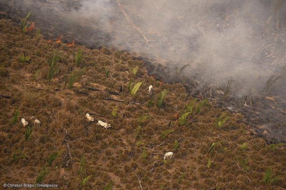 Fire Moratorium - Deforestation and Fire Monitoring in the Amazon in August, 2020Moratória do Fogo - Monitoramento de Desmatamento e Queimadas na Amazônia em Agosto de 2020