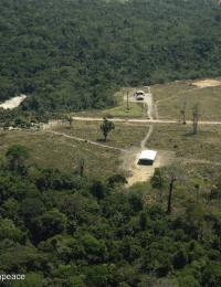 "One Year After the ""Fire Day"" in the Amazon - Bacuri FarmUm Ano Após o ""Dia da Fogo na Amazônia"" - Fazenda Bacuri"