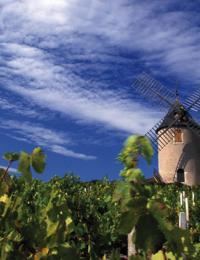 moulin_a_vent_beaujolais_vineyardcdaniel_gillet_inter_beaujolais_1